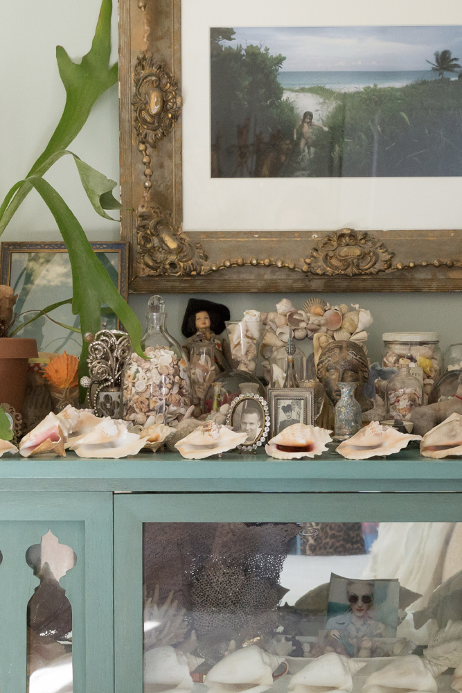 A portion of Linda's shell collection.